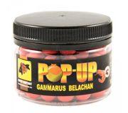 Фото Carp Classic Baits Бойлы Pop-Ups (Gammarus Belachan) 10mm 50g